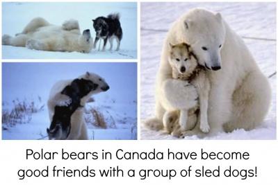 Tierischer Weltfrieden